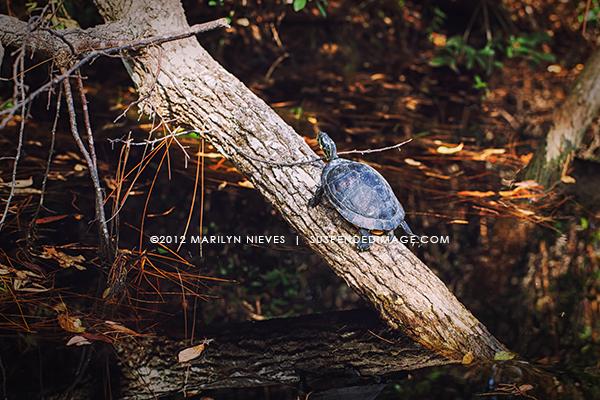 mnieves-6155